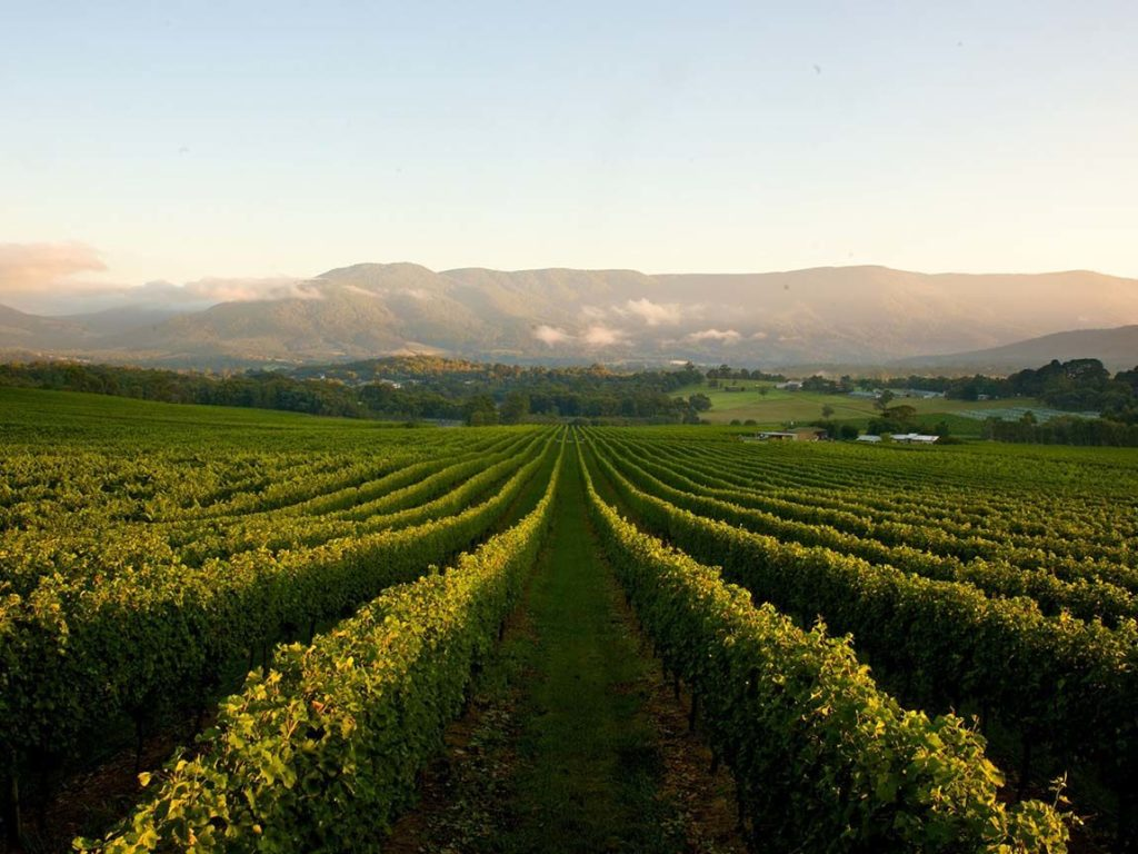 Yarra Valley Winery - Tours